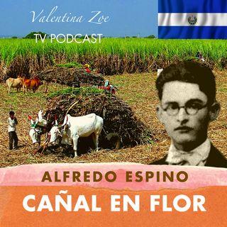CAÑAL EN FLOR ALFREDO ESPINO 🎋💮 | Poema Cañal en Flor de Alfredo Espino 🍯 | Valentina Zoe Poesía