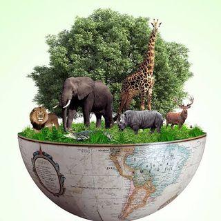 Ciências do ambiente
