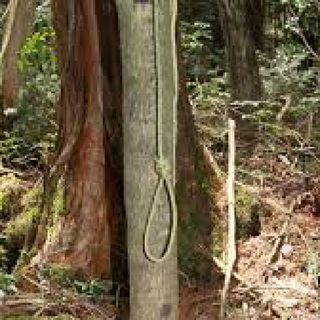 Japanese Suicide Forest