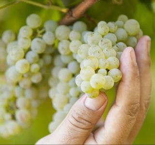 Ep 241: Albariño -- The White Gem of Spain