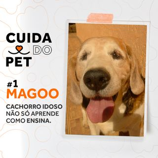 #1 Magoo | Cachorro idoso não só aprende como ensina