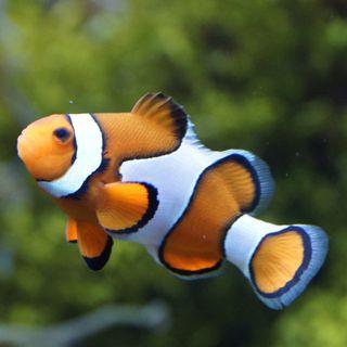 I pesci più straordinari del mondo