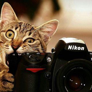 The Kitten Kong Show: Photograph.