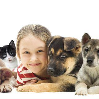 Las mascotas como fuente de estímulos