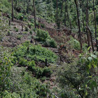 Abren más 20 denuncias por tala ilegal en CDMX