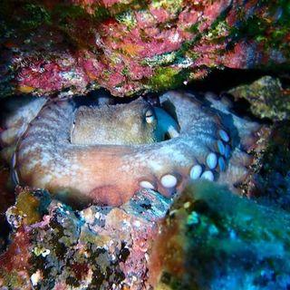 Cefalópodos con el Dr. Fernández Alvárez   #08 Planeta Agua