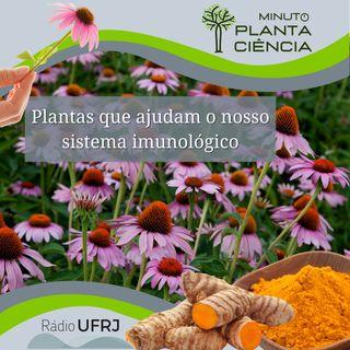 Minuto PlantaCiência - Ep. 04 - Plantas que ajudam o nosso sistema imunológico (Rádio UFRJ)