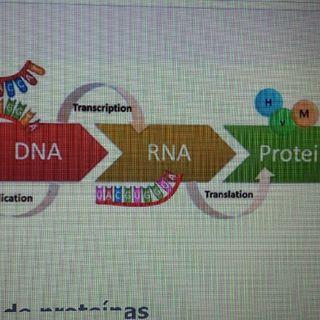 Síntesis De ProteínasBLG001