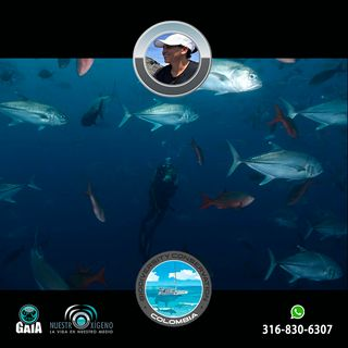 NUESTRO OXÍGENO El cuidado de Malpelo y los océanos - Ing. Erika López