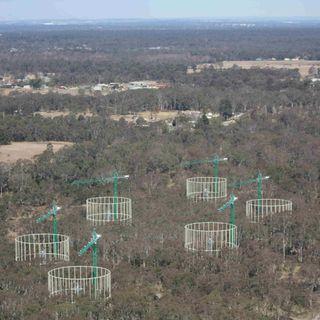 No por más CO2 los árboles almacenan más Carbono | Diario de un Ecólogo #16