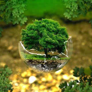 Perché la forestazione è importante?