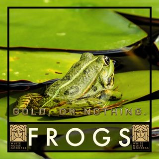 Frogs Singing | White Noise | ASMR & Relaxation