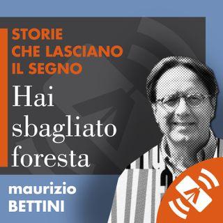 """06 > Maurizio BETTINI """"Hai sbagliato foresta"""""""