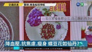 13:07 蝶豆花神效如仙丹?! 中醫:花草茶 ( 2018-08-23 )