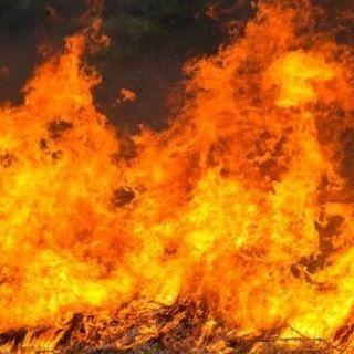 """Emergenza incendi in Calabria e Sicilia, Draghi: """"Serve un piano straordinario"""""""