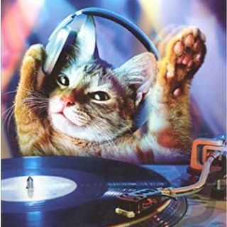 Cats crazy music box