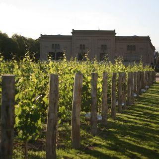 Victoria Mingo of Trapiche Wines