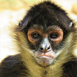 A credibilidade da Anvisa. Que mico!