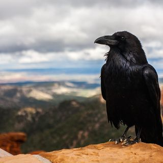 Il corvo ed Ermes