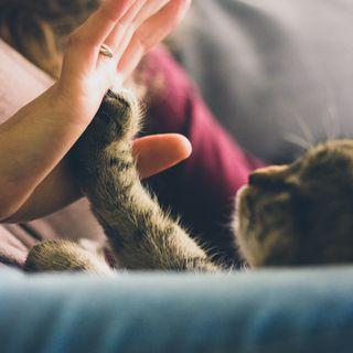 Humanos y Mascotas