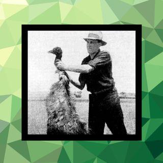 63 - La guerra del emú