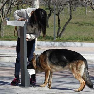Control de mascotas: vacunas, defecaciones, ruido