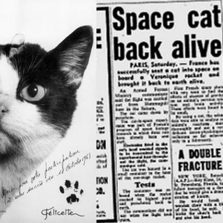 Cattività 64 - Il gatto spaziale
