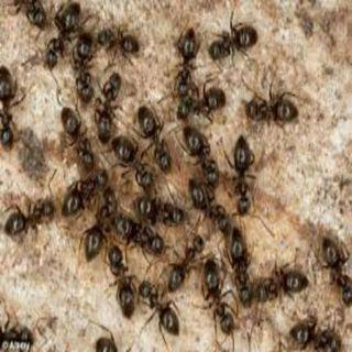 #folktalesforgrownfolks - The Philosopher, The Ants & Mercury