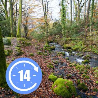 Passeggiare nel bosco