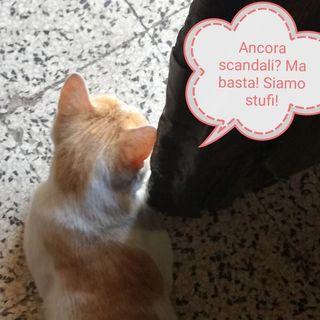 #vr Ed è scandalo (di nuovo)!