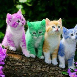 the little rainbow animals