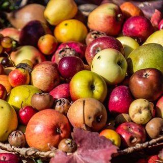 30 anni di Festa dei Frutti Dimenticati - intervista: Flavio Sartoni