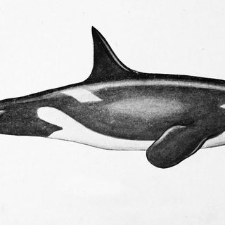 The future of PCB-laden orca whales, and doing genomics work with Indigenous people