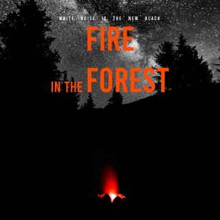 FIRE IN THE FOREST / White noise for studying 5 hours