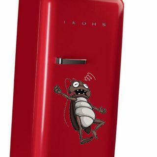 #cremona Anche il tuo scarafaggio è magnetico?
