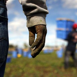 Tutto Qui - martedì 18 dicembre - I lavoratori in nero nelle aziende agricole del cuneese