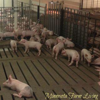 Lori Stevermer, Chipotle pork problems