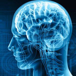 Meccanismi che rendono felice il cervello