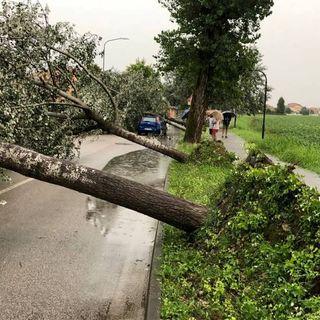 Nuovi danni da temporali: alberi abbattuti dal vento in città, nel Basso Vicentino e nel Bassanese