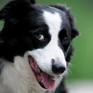 Consejos para estar preparados con nuestra mascota en caso de emergencia o desastre natural
