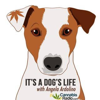 It's A Dog's Life With Angela Ardolino
