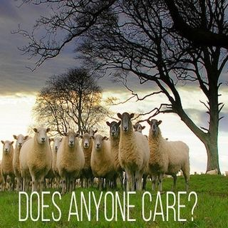 Sheep Without a Shepherd: Jesus Invites Us On A Courageous Adventure