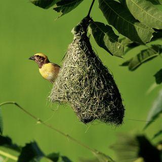 16 - Costruiamo un nido per il 2021?  Volatili architetti e volatili corridori! BIP BIP!