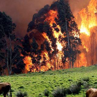 Por qué se le pega fuego al monte, con Javier Jiménez | Actualidad y Empleo Ambiental #52
