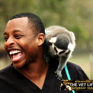 Dr Diarra Blue From Vet Life On Animal Planet
