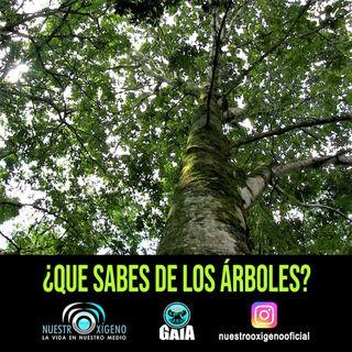 NUESTRO OXÍGENO 29 de abril Día del Árbol  ¿Qué sabes de los árboles?
