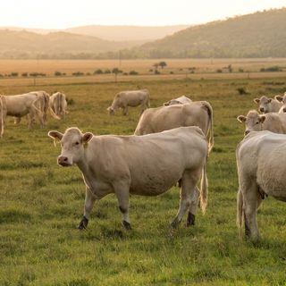 Agricoltura e zootecnia emissioni zero