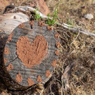Hablamos del amor en el sentido más amplío y viajamos hasta La Gomera - 7 Días X Delante -  13102020