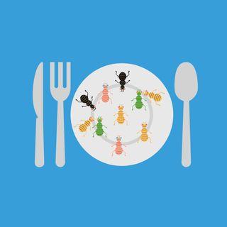 Episodio 19: gli Insetti come Alimento?