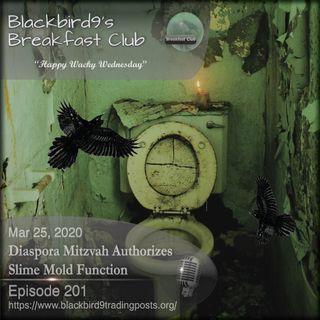 Diaspora Mitzvah Authorizes Slime Mold Function - Blackbird9 Podcast